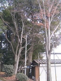 futyuu_inari1.jpg